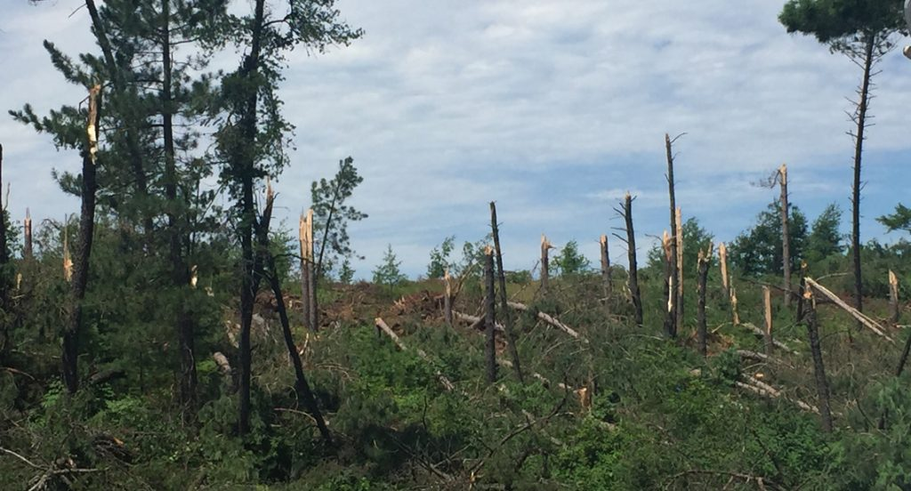 A Wisconsin Public Service photo shows the type of damage crews are finding in the Northwoods as they work to restore power. More than 31,000 WPS customers lost power during the storms Thursday.